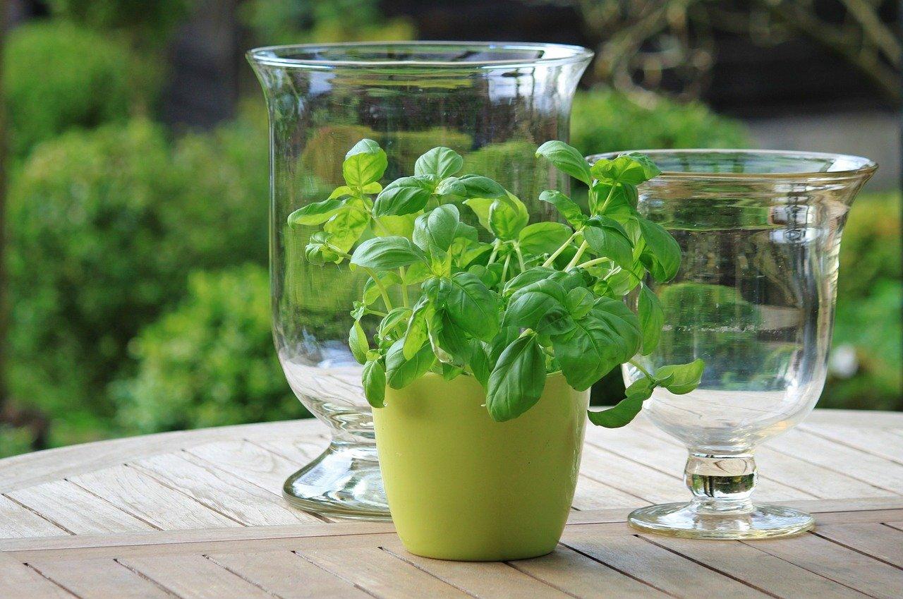 植木鉢 水栽培
