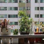 室内で栽培している植木鉢に湧く「コバエ」を簡単に退治する方法