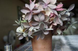 紫陽花の挿し木に再度挑戦