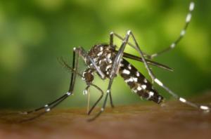 「蚊」に刺されないためには寄せ付けないことから!「虫よけ」の使い方と選び方