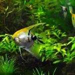 Knowledge Base 金魚 熱帯魚