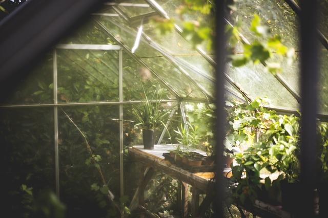 寒さに弱い植物を冬越しさせるための必須アイテム「小型温室」